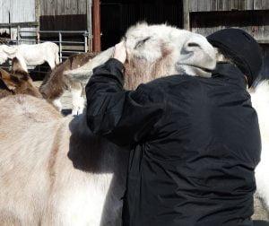 Redwings Ada Cole Rodney the donkey