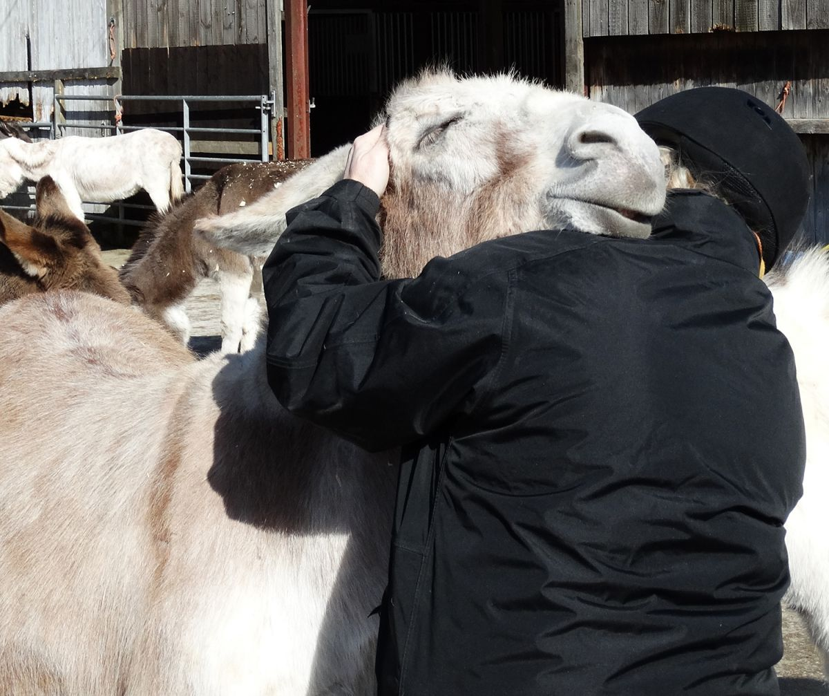 The horse sanctuary galloping through the most difficult time in its history